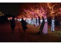 桜まつり〜冬〜 大阪狭山イルミネーション